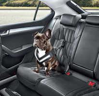 Собака в багажнике автомобиля
