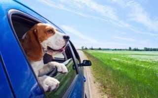 Накидка на заднее сидение для собак